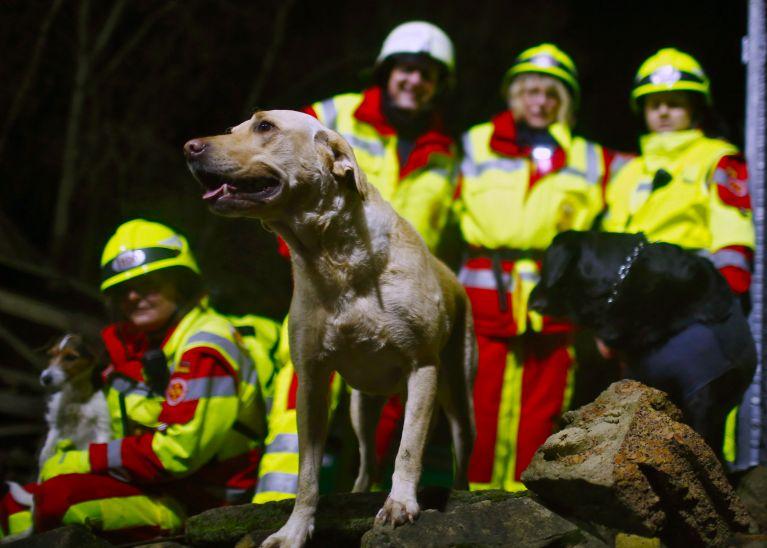 """""""Such und Hilf!"""": Rettungshunde trainieren Suche nach Vermissten"""